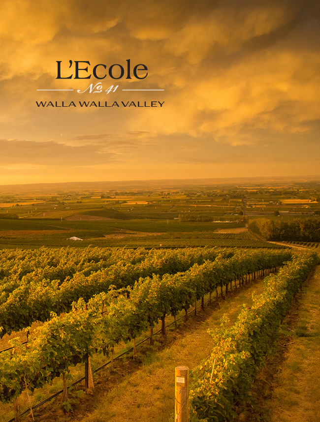 Lecole No 41 website design